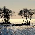 写真: 光る湖(うみ)
