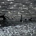 Photos: Silent Spring