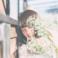 写真: かすみ草