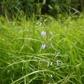 タデ原湿原の夏(3)