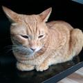 写真: 猫カフェキューリグ TheLoft 天神(7)