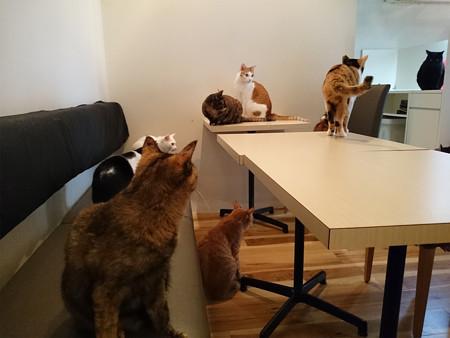 猫カフェキューリグ TheLoft 天神(4)