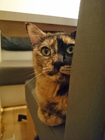 猫カフェキューリグ TheLoft 天神(9)