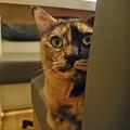 写真: 猫カフェキューリグ TheLoft 天神(9)