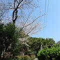 Photos: 虎尾桜までの道