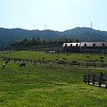 写真: もーもーらんど油山牧場(4)