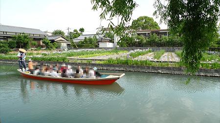 柳川~椛島菖蒲園(2)