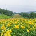 Photos: 小樽春香山ゆり園