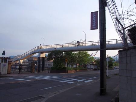 areikarasukojima06