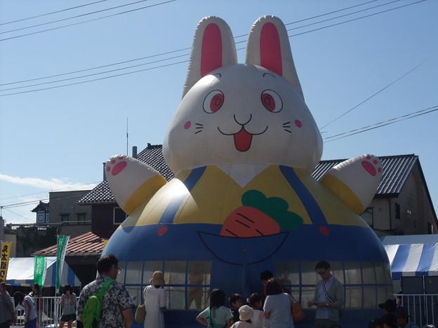 Photos: ふわふわウサギ