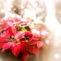 Photos: 今年初撮りの花