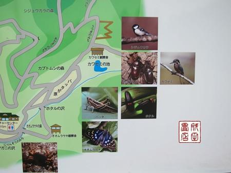 桐生自然観察の森05