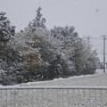 Photos: 雪03