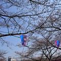 写真: 桜市02