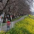 写真: 桜05