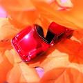 写真: ~紅葉に蓮狩りされた・・・うへへ~( ̄▽ ̄;)