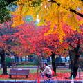 ~ルンルン~♪紅葉の中を自転車通勤よ~(´艸`*)