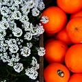 写真: ~Suite Arissamu&Orange~