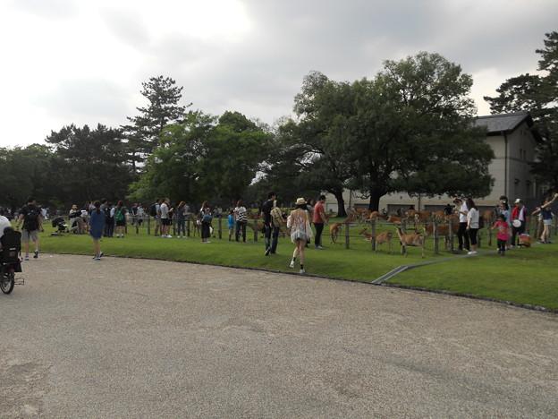 27 奈良公園
