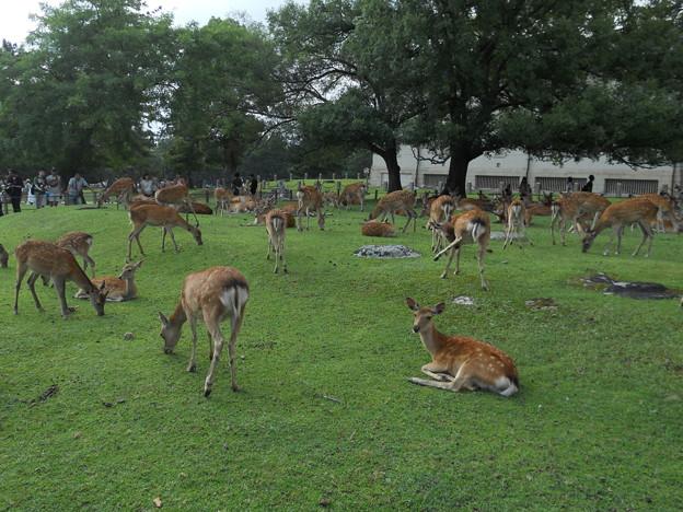 28 奈良公園