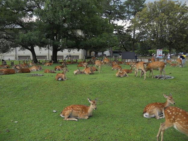 32 奈良公園
