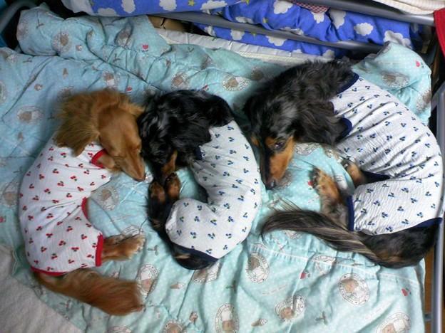 おじろぜうり、おそろいのパジャマ~