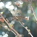 写真: 春の息吹♪~