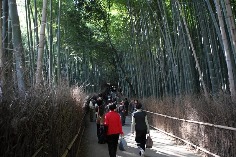 IMG_9791京都の紅葉_2010年11月