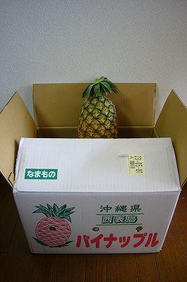 140721-1 西表島のパイナップル