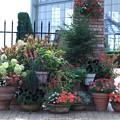 お花の寄せ植え  花のミュージアム・フローリィ