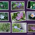 わが家の8月の花(2)