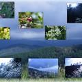 白山展望台とススキ