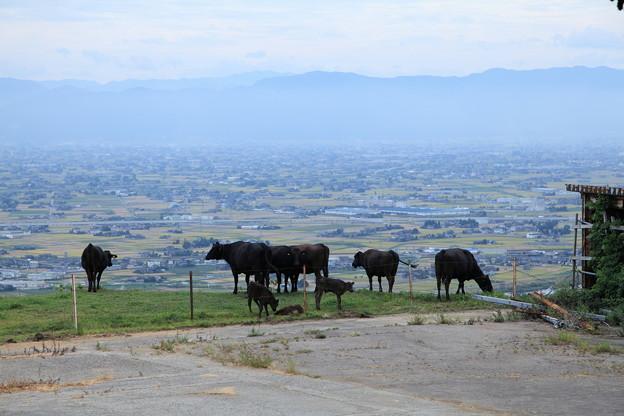 牛さんの楽園
