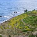 9月の白米千米田と日本海 稲刈りが大分終わりました。