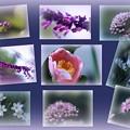 わが家の10月の花(1) 台風が去って雨の雫