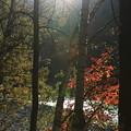 夕陽と紅葉  梓川