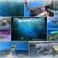 のとじま水族館 魚の群れと海藻の海 他