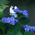 紫陽花と白鳥(1) 踊り子のように^^
