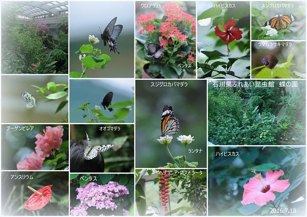 石川県ふれあい昆虫館 蝶の園