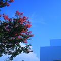 青空と百日紅(1) 金沢21世紀美術館