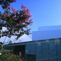 青空と百日紅(2) 金沢21世紀美術館