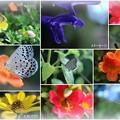 蝶と蜂と花