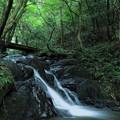 Photos: 七つ滝 四の滝