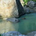 Photos: 手取川 上流