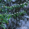 初秋の池(2)