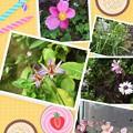 我が家の10月の花