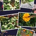 蝶と秋の花