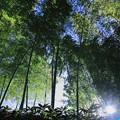 Photos: 竹