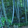 竹林のお地蔵様