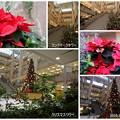 写真: 横浜ランドマークタワー クリスマス